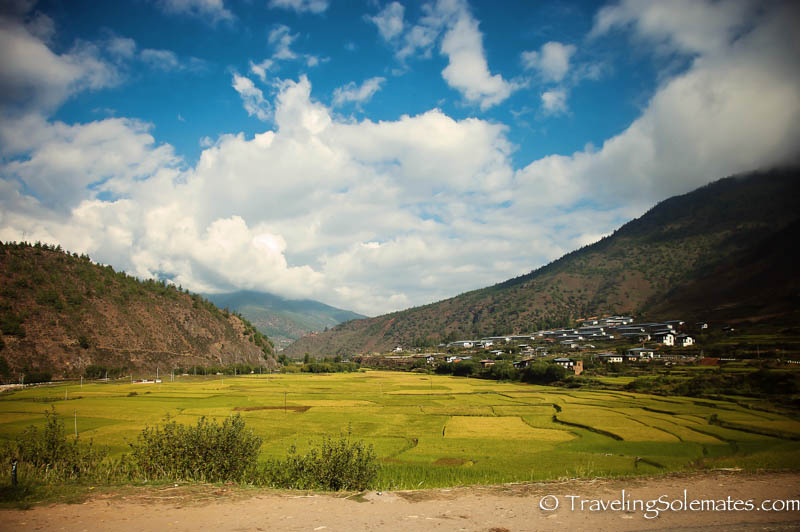 Rice Paddies, Paro to Thimphu Road Trip, Bhutan