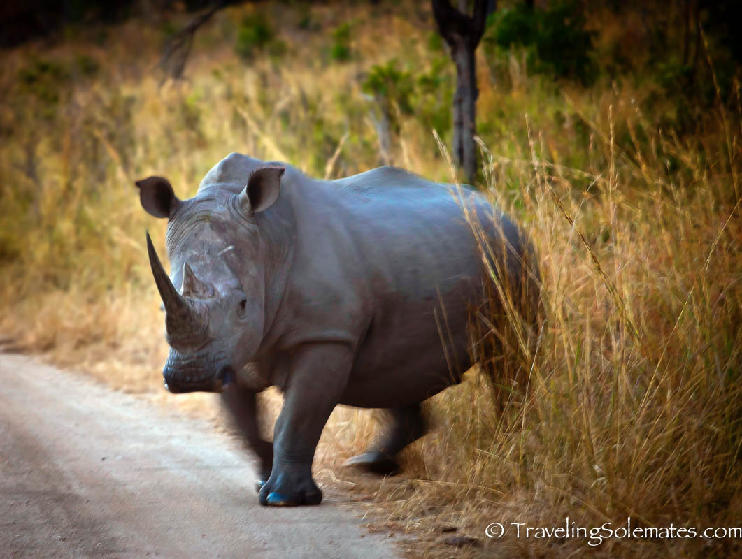 rhino capture at kruger national park Ethical issue kruger national park is part of the sanparks organization substantial global impact by continuing their rhino capture and sale practice in terms of.