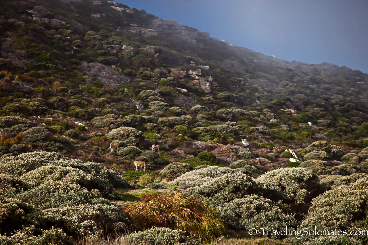 13-Elans on the cape mountains, Cape Peninsula, South Africa