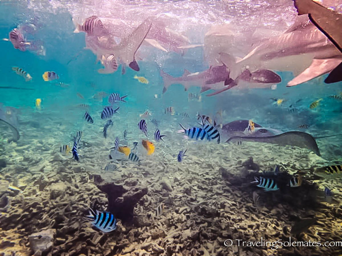 Snorkeling during Lagoon Safari, Bora Bora, French Polynesia, South Pacific