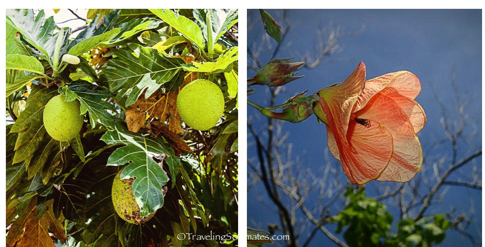Floras of Bora Bora