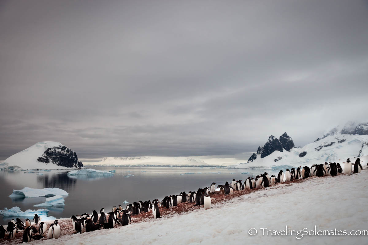 Penguin Colony in Danco Island, Antarctica