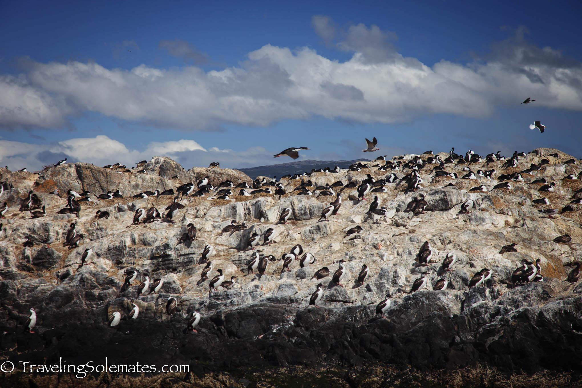 Bird colony in Beagle Channel, Tierra del Fuego, Argentina