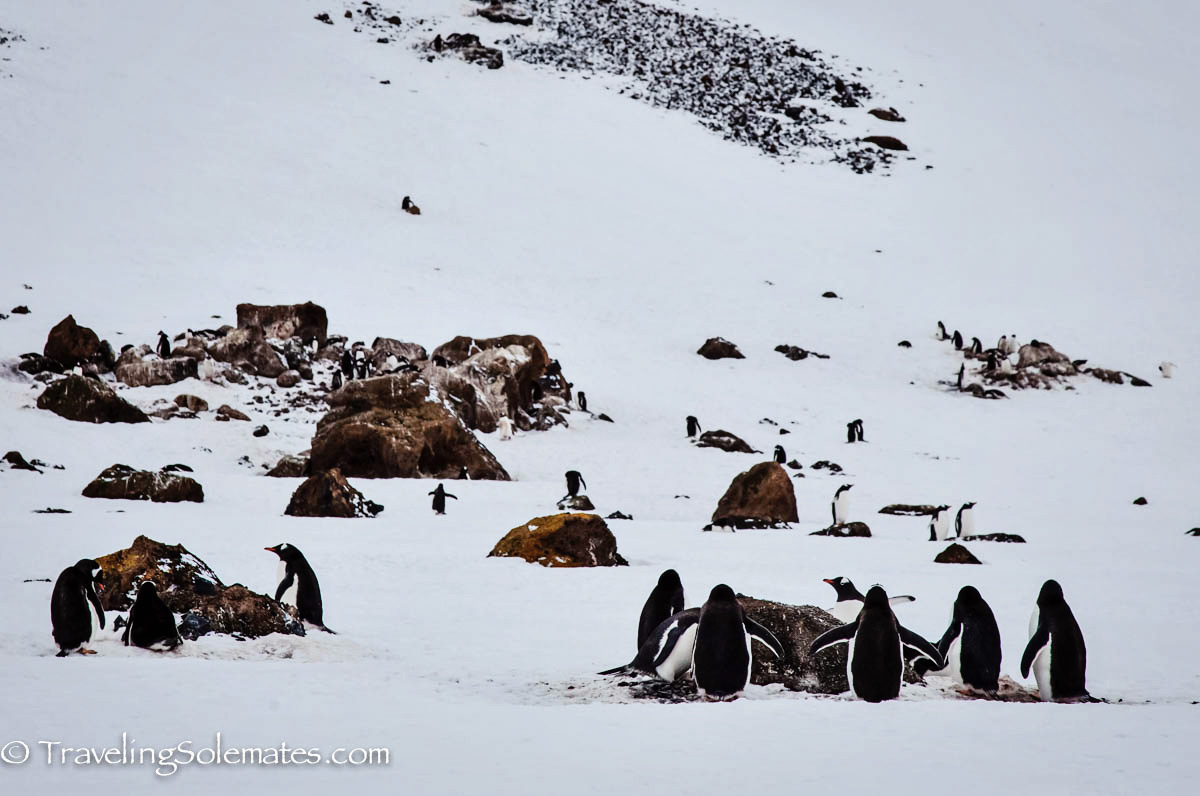 Penguin Colony in Brown Bluff, Antartica, National Geographic Explorer, Lindblad Expeditions