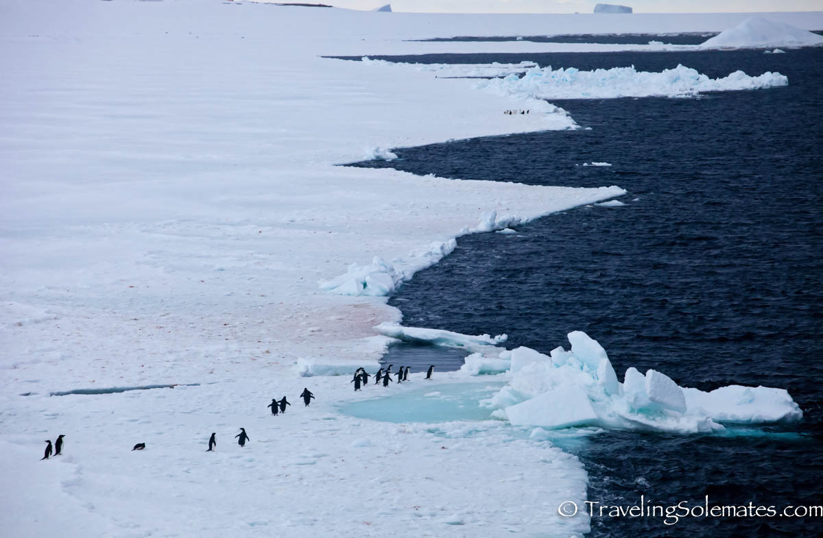 Sea Ice with penguins, Active Sound, Antarctica, National Geographic Explorer, Lindblad Expeditions