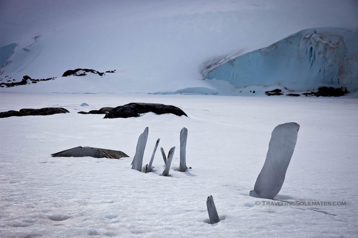 Whale bones in Jougla Point, Port Lockro