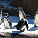 How to Spend a Day at Woodland Park Zoo