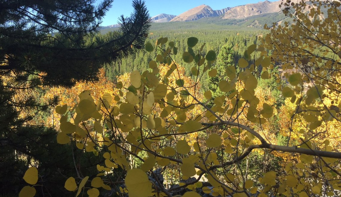 Looking for fall color on Aspen Alley Trail in Breckenridge, CO