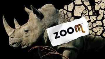 ZOOM-Rinoceronte