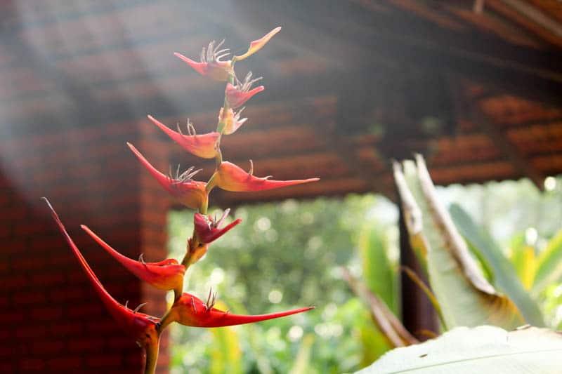 magnolia resorts