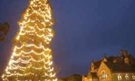 The Big Tree Switch-On at Wakehurst Place