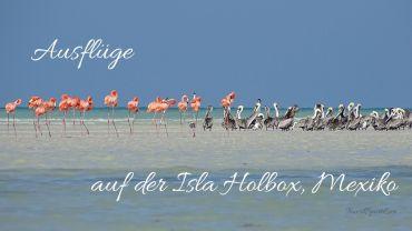 isla-holbox-ausfluege-titel