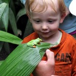 Our toddler takes a closer look at a red-eyed tree frog in Costa Rica's La Paz Waterfall Gardens and Nature Park