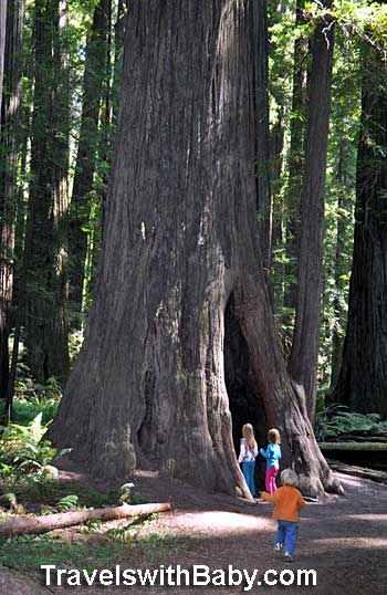 """Kids exploring a natural """"tree cave"""" at Humbolt Redwoods State Park in California"""