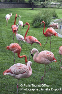 Flamingoes at the Jardin de Plantes menagerie in Paris