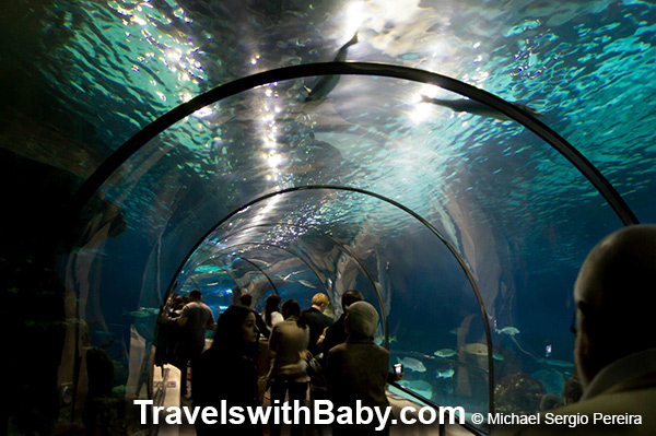 Barcelona with kids? Don't miss the aquarium!