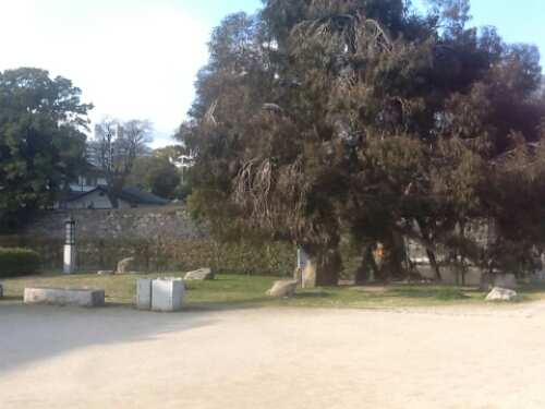 A tree outside Hiroshima Castle that survived the bomb