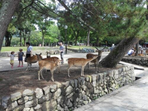 Deers close by Daibutsu-den