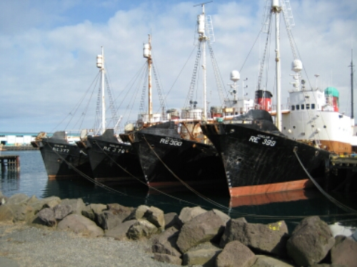 Sightseeing in Reykjavik