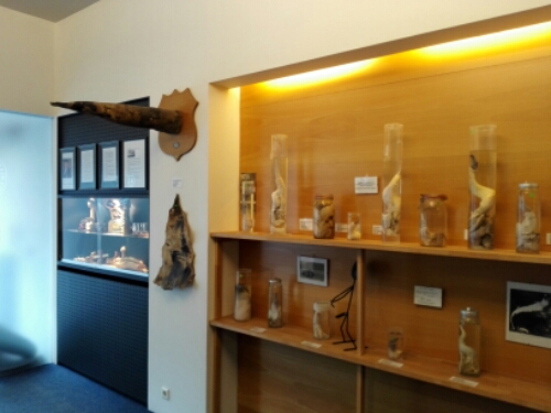 Reykjavik Penis Museum