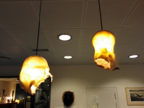 Foreskin lamp shades at the Reykjavik Penis Museum