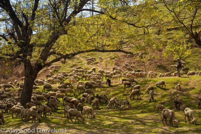 Kashmir - Spring Swing