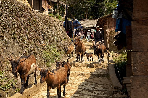 Trekking in Sapa north vietnam