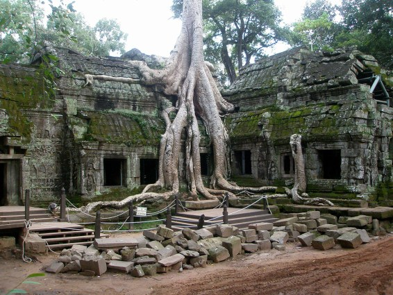 Nature intertwines within the ruins of Ta Prohm temple in Cambodia