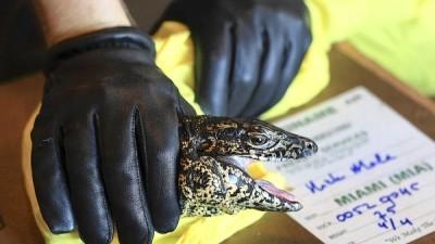 Exotic Animals Border Agents Inspect Exotic Animals