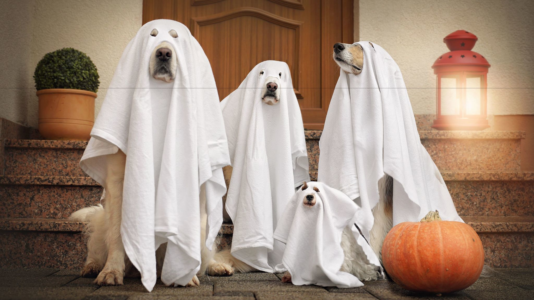 Dog costumes: Halloween cuteness overload
