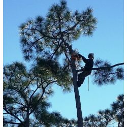 Small Crop Of Out On A Limb Tree Service