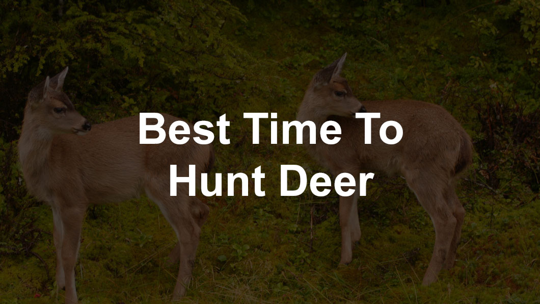 Deer Feeding And Movement Times - Best Time To Hunt Deer
