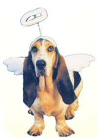 Lil Angel Dog Costume