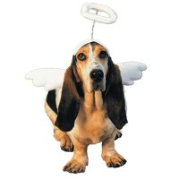 Lil Angel Pet Costume