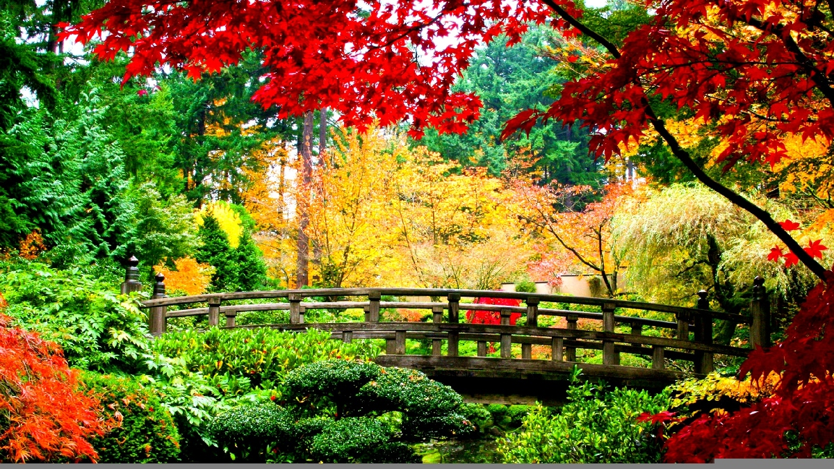 4k Central Park In The Fall Wallpaper Japanese Autumn Bridge Wallpaper Showa Memorial Park Tokyo
