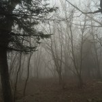 Even by the end of the hike it was still very foggy on the mountain.