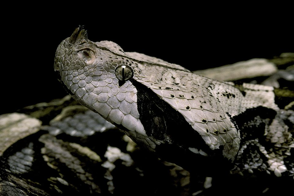 A Top 10 List Of Africa39s Most Dangerous Snakes