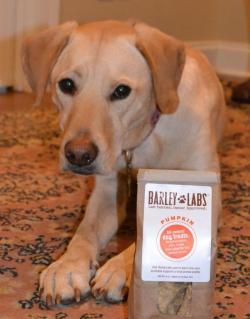 Irresistible Barley Dog Treats Made Lots Hotels That Allow Dogs San Diego Hotels That Allow Dogs Duluth Mn Lots Oflove Barley Dog Treats Made A Little Help From A Tucker Talks Tucker Talks