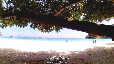 หาดทรายสีขาว ทะเล ต้นไม้ บรรยากาศสุดยอดมาก