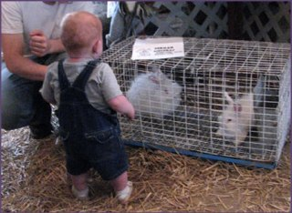 Baby wants to pat the Bunnies