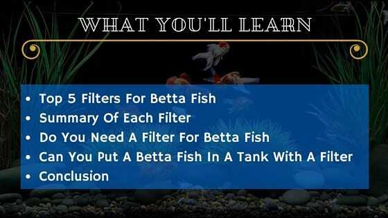 Best filter for betta fish selection guide for Filter for betta fish