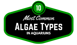 10 Quick Aquarium Tips That Will Save You Time & Money   TFCG