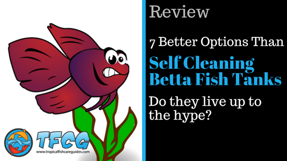 7 Better Options Than A Self Cleaning Betta Fish Tank Tfcg