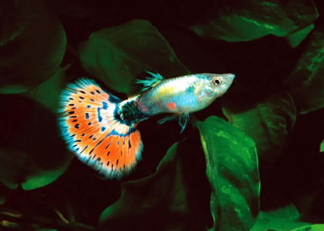 Tropical fish international tropical fish international for Koi fish for sale nj