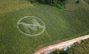 Image Credit / Greenpeace