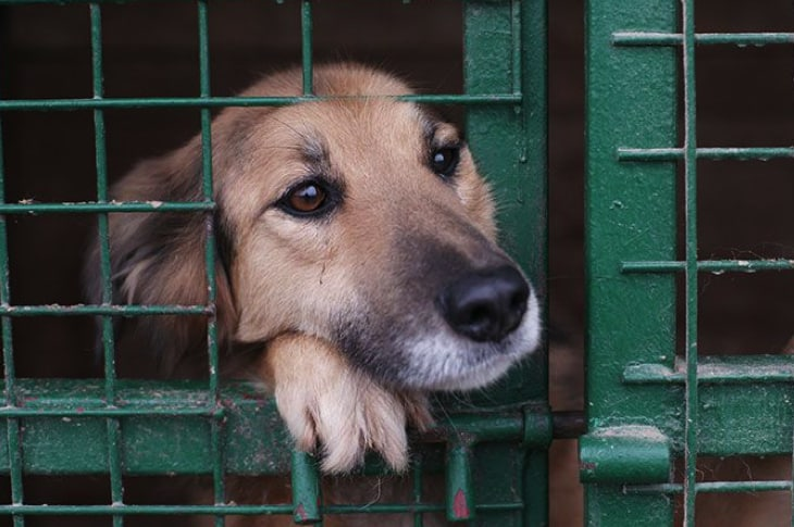 Another Major City Now Requires Pet Stores To Get Their Animals From - sac shelter