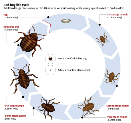 About Bed Bugs \u2013 True Heat Solutions