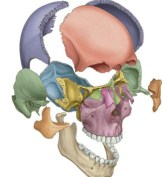 Abnormal Brains