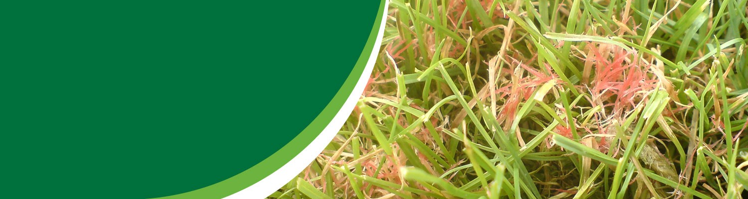 Lawn Diseases - TruGreen Professional Lawn Care