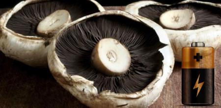 mushroom-portabello-energy